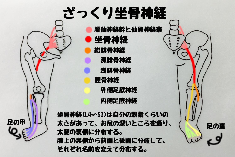 神経痛 簡単 坐骨 ストレッチ